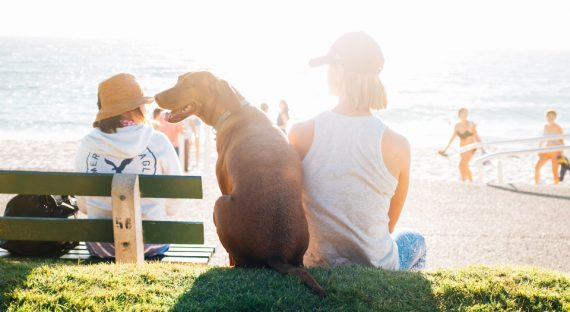 Dog-Friendly Beaches in the UK