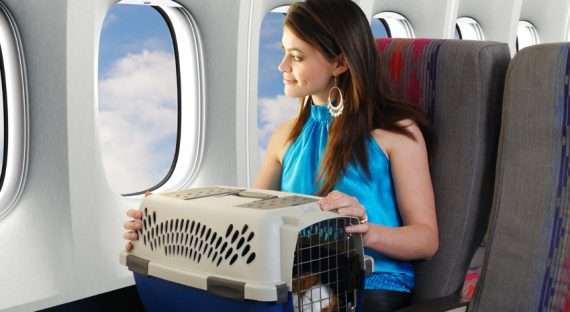 Pet Care Tips When Traveling
